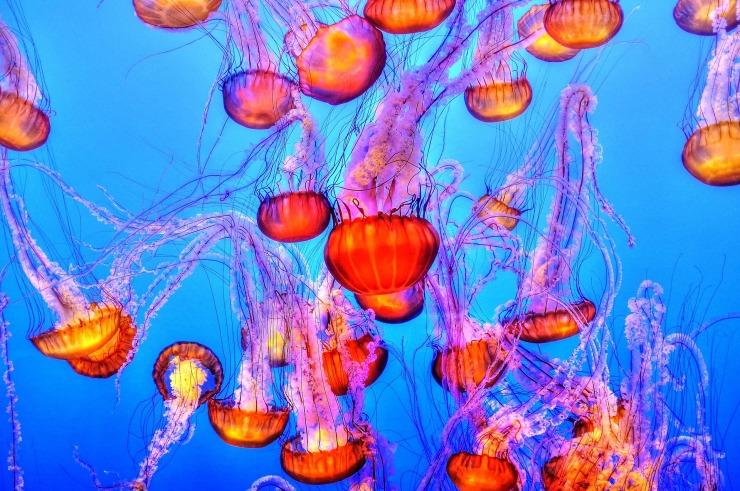 jellyfish-931714_1920